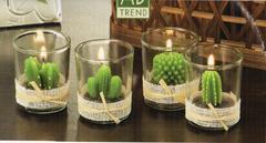 Candela piantina grassa  x 12  in vaso di vetro
