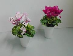 Vasetto con ciclamini  in due colori