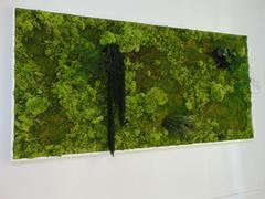 """Quadro Vegetale preservato"""" La Siepe """" cm. 160 x 80 per fioristi, Architetti e Arredatori"""