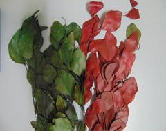 Eucalyptus globus stabilizzato gr. 200  in due colori
