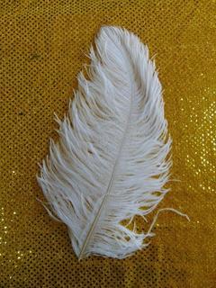 Piume di struzzo  cm. 28/32 in vari colori
