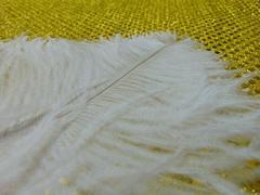 Piume di struzzo  cm. 40/45 in vari colori