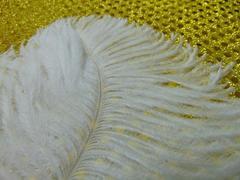 Piume di struzzo  cm. 55/60 in vari colori