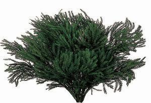 Erica Moss stabilizzata - Licopodium  busta da  Gr 500
