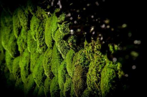 Muschio Ball Moss Preservato Polemoss Finlandese  per fioristi, wedding e Arredatori