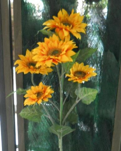 Girasole x 5  Large Stem H 160