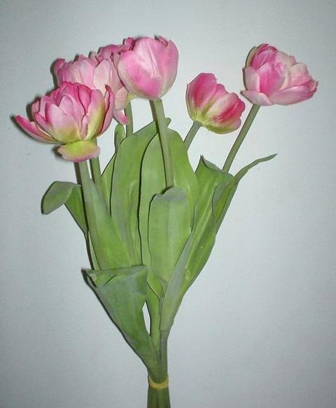 Tulipani x 6 legati Evergreens