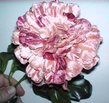 Zinnia velluto H 100 Rosa H 100