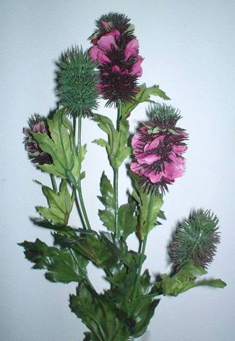Banksia x 5 wild in Poliestere per fioristi e wedding