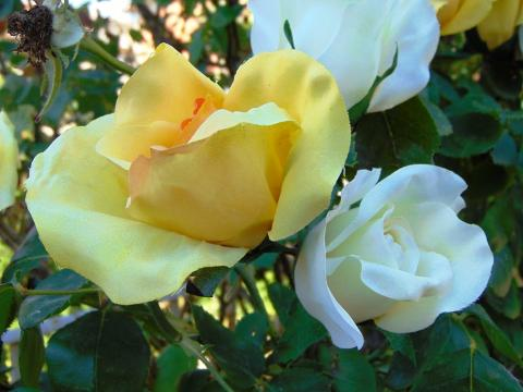 Bocciolo di rosa con 6 foglie in poliestere - Sconti per Fioristi e Aziende