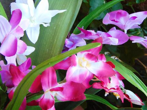 Orchidea Artificiale x 7 H 60 per fioristi e wedding