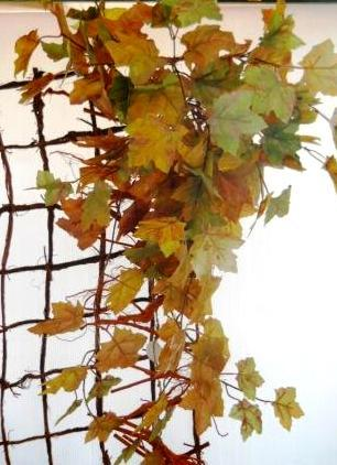 Acero Cadente x 180 foglie  a toni Autunnali