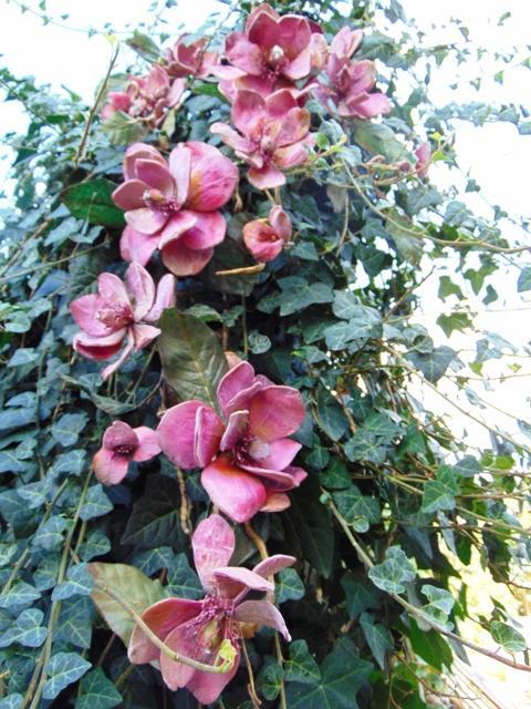 Magnolia Branch x 3 in Polifoam - Sconti per Fioristi e Aziende