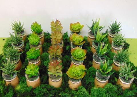 Piante grasse artificiali in 5 modelli con vasetto in vetro