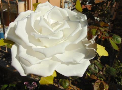 Rosa Aperta cm. 25 in polifoam con stelo
