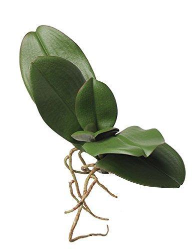 Foglie di Orchidea x 5 in poliestere da cm. 15 con radici