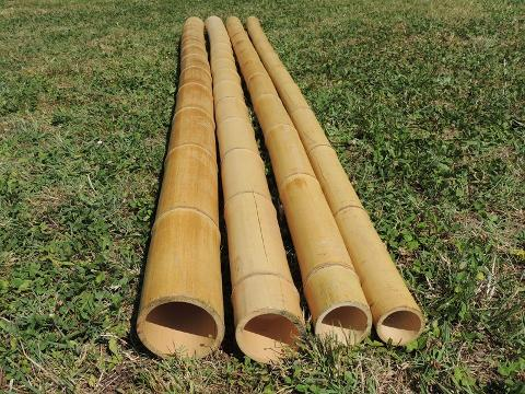 Canne di Bamboo dm. 12/14 cm. Naturale per fioristi, wedding e Arredatori