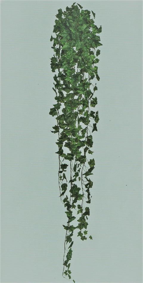 Edera Inglese cadente  H 180  con 1076 foglie
