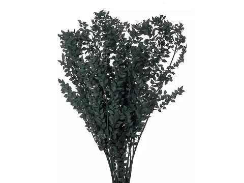 Ruscus Aculeatus - Pungitopo  Stabilizzato - Sconti per Fioristi e Aziende