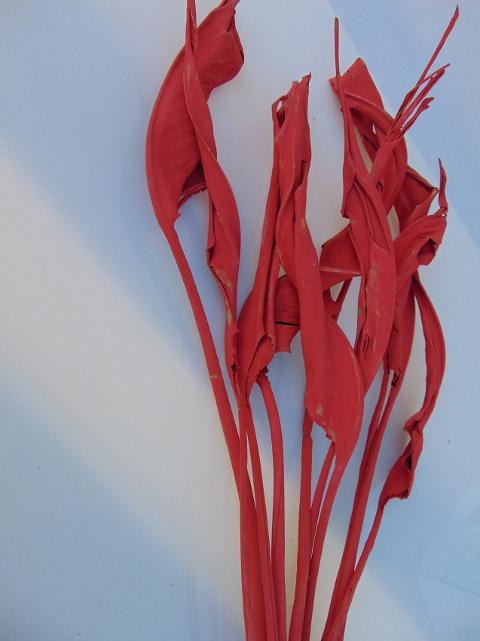 Foglie di sterlizia x 8 stabilizzata  H 80 colorata gr. 250 per fioristi, wedding e Arredatori