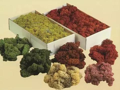 Muschio Nordico Naturale gr. 500 Island Moss - Sconti per Fioristi e Aziende