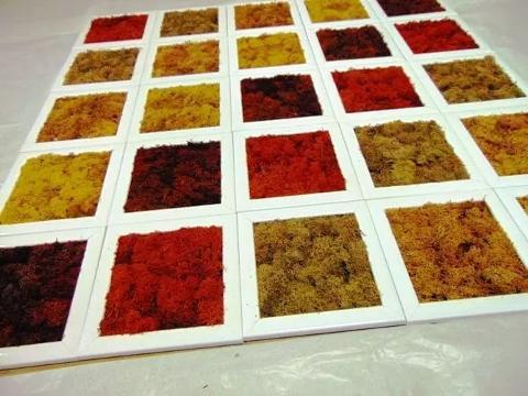 Quadro moss cm. 20 x 20 Head o Flat work - Sconti per Fioristi e Aziende
