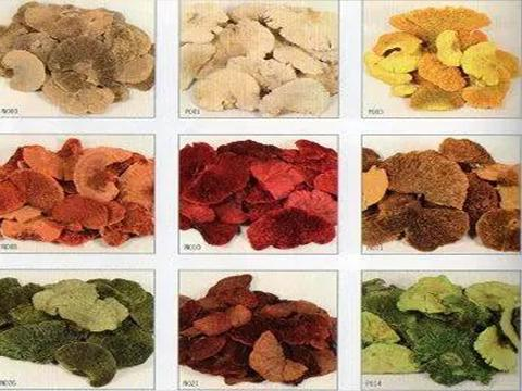 Fungo di Platicerium naturale stabilizzato conf. gr. 500 - Sconti per Fioristi e Aziende