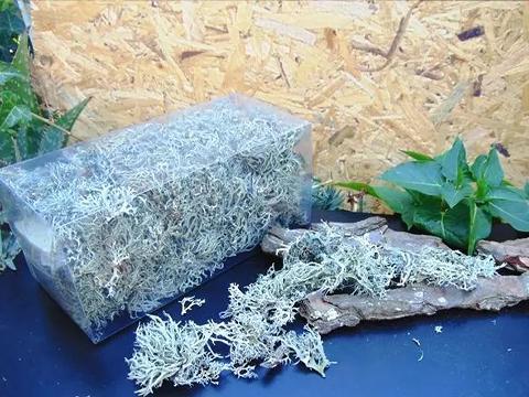 Muschio Argenteo di Eucaliptus gr. 100 - Sconti per Fioristi e Aziende