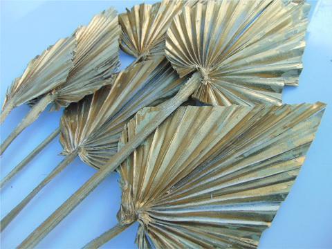 Palm Spear  Naturale Colorata - Sconti per Fioristi e Aziende