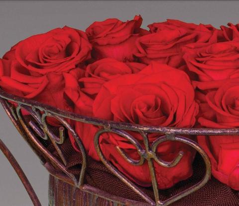 Bocciolo di Rosa Preservata Premium  cm. 6,5 - Box da 6 rose - Sconti per Fioristi e Aziende e Wedding
