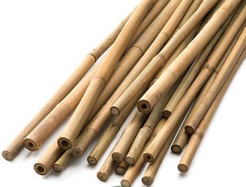 Canna di Bamboo dm 3,1 / 3,5 H 200 - 250 - 300 - Sconti per Fioristi e Aziende