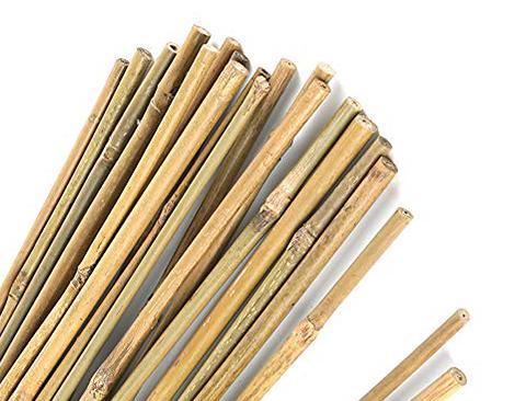 Canna di Bamboo dm 2,2 / 2,5 H 250 - 300 - Sconti per Fioristi e Aziende