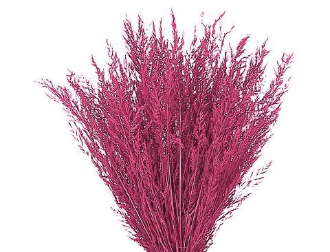 Cipressina Dry gr. 150 H45/50 - Sconti per Fioristi e Aziende