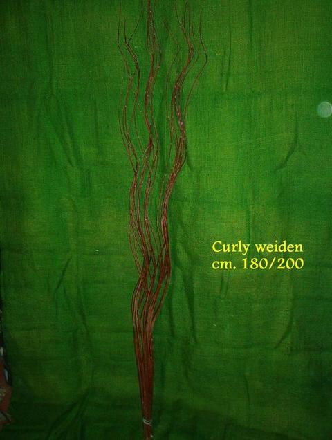 Waiden Curley H 180 - Sconti per Fioristi e Aziende