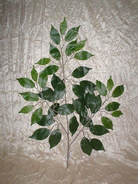 Ficus Benjamin x 43  verde - Sconti per Fioristi e Aziende