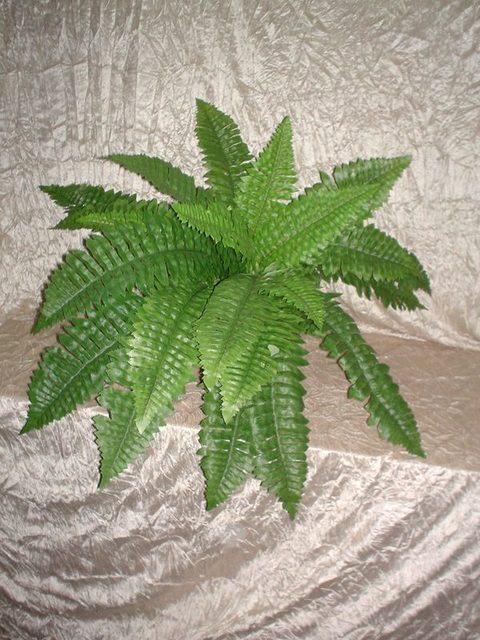 Felce Boxton x 4 con 22 foglie  animate
