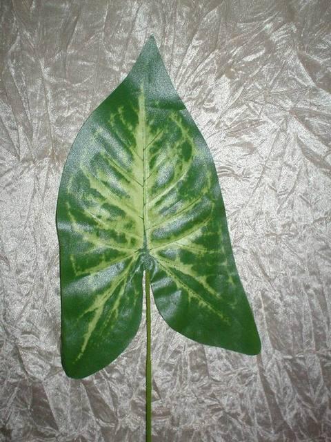 Foglia di Singonium  H 56 Verde