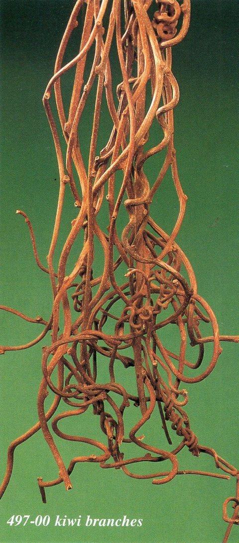 Kiwi H 100  rami naturali x 10