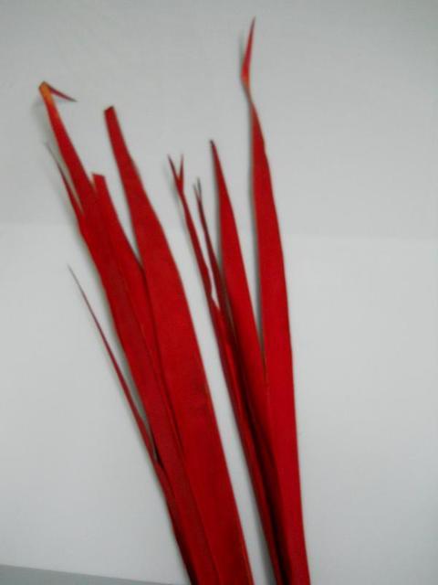 Foglia di Tipha - (Palm Sun)  H 120  Rosso