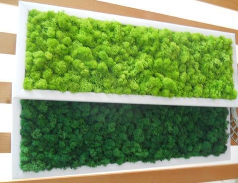 Quadro Moss cm. 20 x 60 Head e Flat work - Sconti per Fioristi e Aziende
