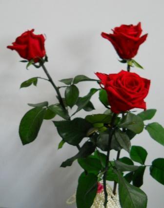 Rosa Preservata  H 60/70  - Sconti per Fioristi e Aziende