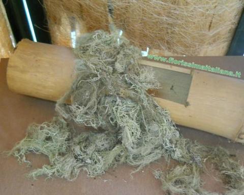 Muschio di Palude ( Swamp Moss )  gr. 250