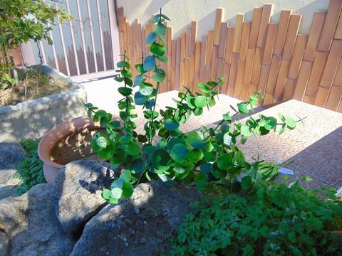 Ramo eucalipto x 12 in plastica verde