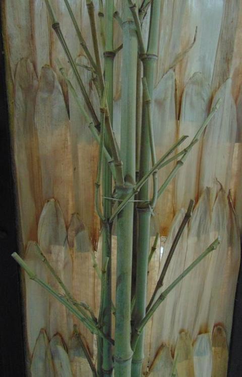 Canne bamboo H 200 con rami conf. 5 pezzi