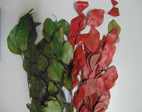 Eucaliptus Popolus stabilizzato  gr. 200 in due colori