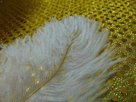 Piume di struzzo  cm. 34/38 in vari colori
