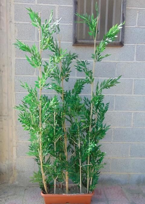 Canna bamboo H 120  con 241 foglie - Sconti per Fioristi e Aziende