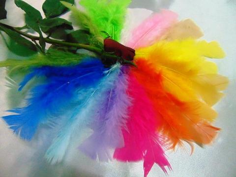Piume colorate H 17 confezione da 80 piume