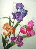 Iris in velluto x 1 Modello lusso