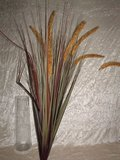 Tipha Grass x 8 Plant